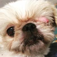 Southern Shih Tzu and Toy Breed Rescue